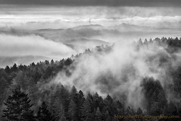 Mount Tam Winter Fog