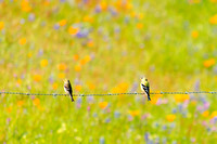 Goldfinches and Wildflowers